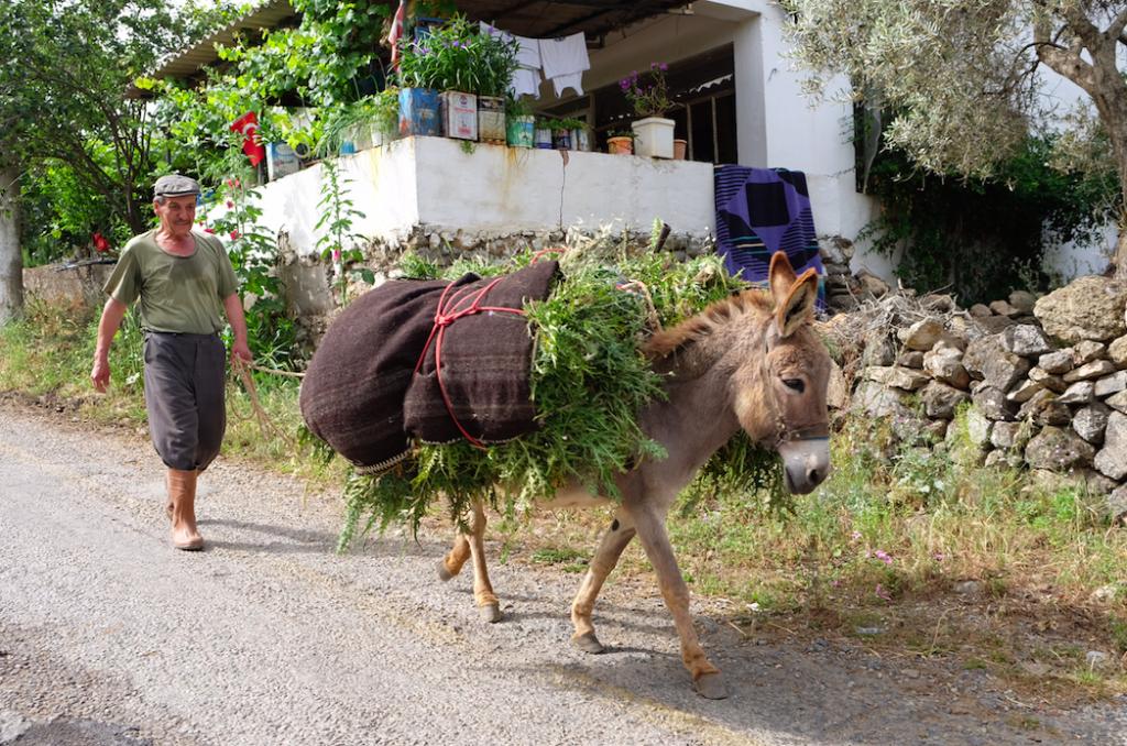 Turkey:donkey:edited